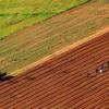 L'Afrique possède 60% des terres non cultivées au monde, selon la FAO