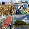 Algérie-UE: des projets de plus de 200 millions d'euros pour la diversification de l'économie