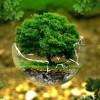Le prix de la Ville verte a instauré l'esprit environnemental chez le citoyen